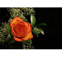 Yellow and red rose portrait Photographic Print