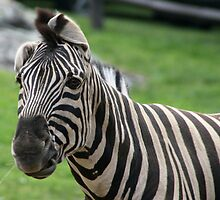 Stripes by CMCetra