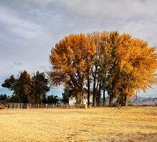 Stonehouse Country Inn II by Lynn Starner