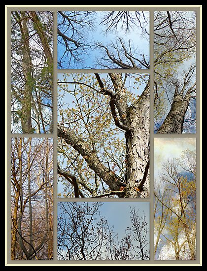 The Beautiful Bones of Trees by MotherNature