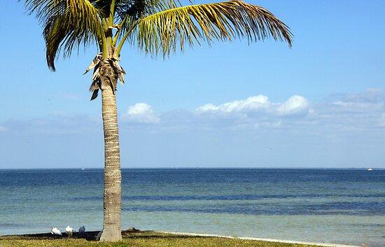 Paradise! by John  Kapusta