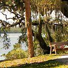 Bench by the Lake by Rosalie Scanlon