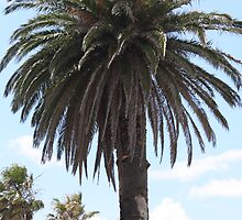 Palm Tree by chasingangel82