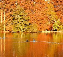 SWAN LAKE, SUMTER SC by cshphotos