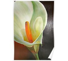 Large Calla Lily Poster
