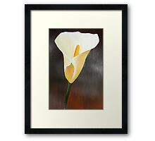 Cream Calla Lily Framed Print