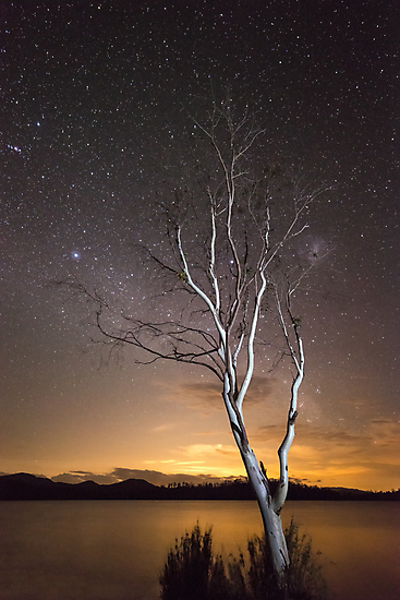"""""""Can't see the Forest for the Tree"""" ∞ Lake Somerset, QLD - Australia by Jason Asher"""