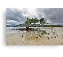 Mangrove Tree Canvas Print