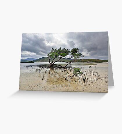 Mangrove Tree Greeting Card