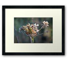 Autumn Seeds Framed Print