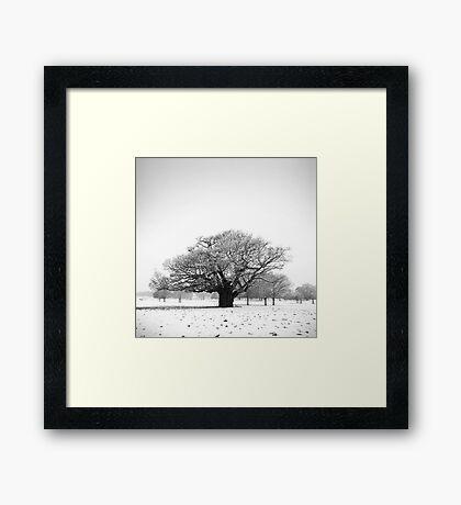 Ancient Oak, Richmond Park, England Framed Print