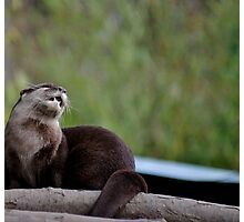Otter Blues Photographic Print