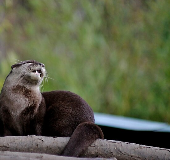 Otter Blues by Ladymoose