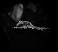 Snail in B&W by Josie Jackson