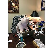 Oink in the Office Photographic Print
