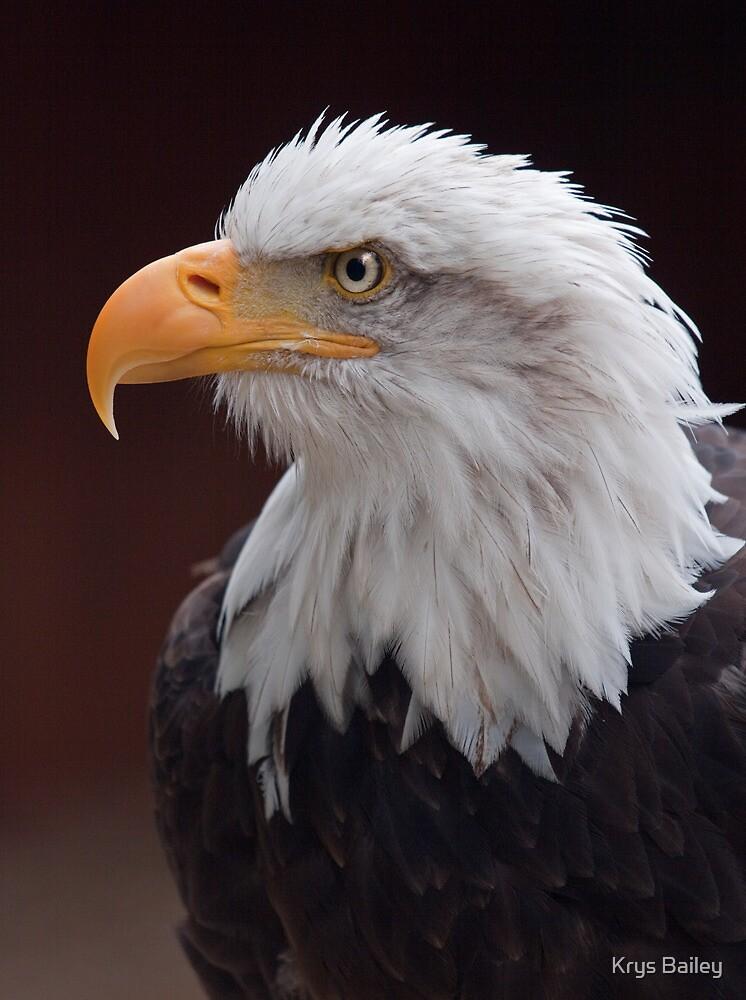 Proud Eagle by Krys Bailey