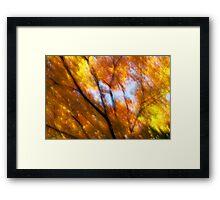 Light versus dark - 2012 Framed Print