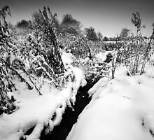 Black Winter Stream BW by Andy Freer