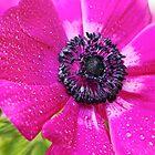 Pink Anemone... by Bob Daalder