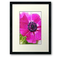 Pink Anemone... Framed Print