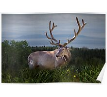 Elk or Wapiti Photographic Nature Portrait Poster