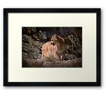 Mountain Lion on the Prowl Framed Print