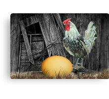 Which came First the Chicken or the Egg? Canvas Print