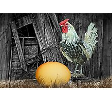Which came First the Chicken or the Egg? Photographic Print