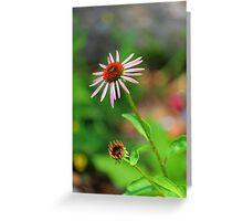 Echinacia purpurea Greeting Card