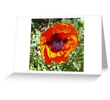 Oriental poppy in orange and green Greeting Card