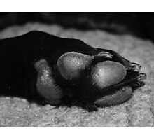 Paws out Photographic Print