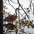 Resident heron by nealbarnett