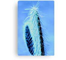 Spikey Canvas Print