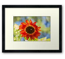 Sunflower 5 Framed Print