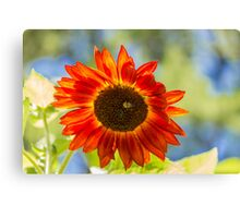 Sunflower 5 Canvas Print