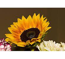 Sunflower 7 Photographic Print