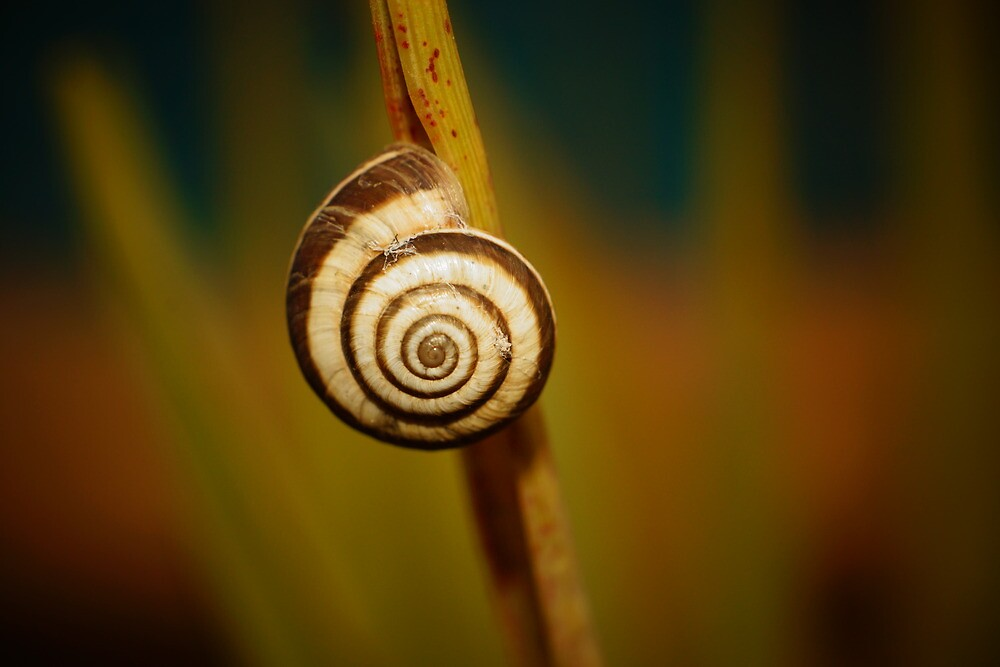 Snail on Grass by robinrowe