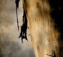 Old growth by Chris Armytage™