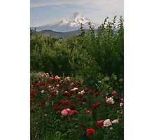 Mt Hood with Roses Photographic Print