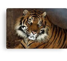 ..a Tiger in textures.. Canvas Print
