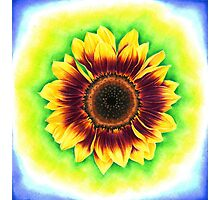Sunflower Drawing Photographic Print