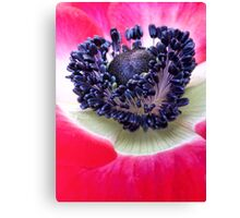Red Anemone.... Canvas Print
