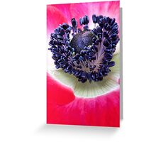 Red Anemone.... Greeting Card