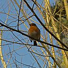 Don't you just love Robins! by Sarah Williams