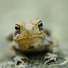 mad toad by George  Close