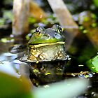 green frog in the headlight look by George  Close