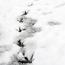 Follow the white bird trail! by Sarah Williams