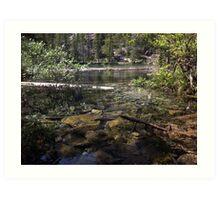 Sunken Timber Lake Art Print