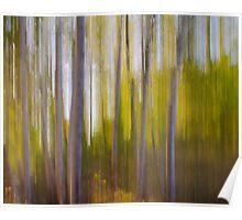 Birch Blur Poster