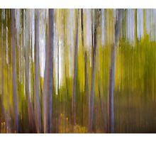 Birch Blur Photographic Print